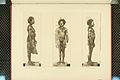Nova Guinea - Vol 3 - Plate 49.jpg