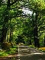 Oaks - panoramio (2).jpg