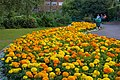 Oranges and Yellows - geograph.org.uk - 896975.jpg