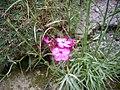 Orléans - jardin des plantes (32).jpg