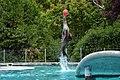Otarie de Californie (Zoo Amiens)c.JPG