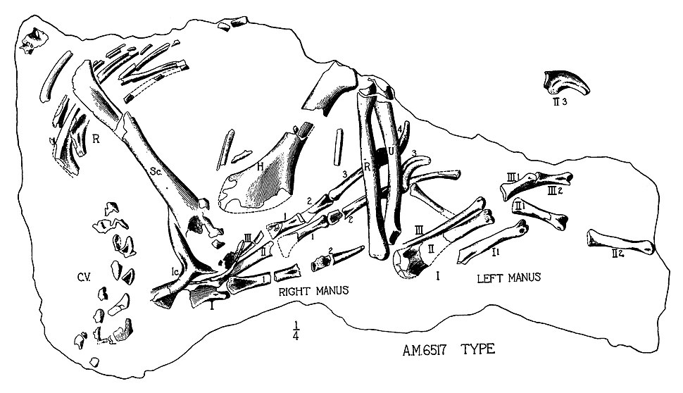 Oviraptor arms