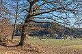 Pörtschach Winklern Quellweg Eiche am Wanderweg NW-Ansicht 12012020 8043.jpg