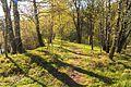 Přírodní památka Ratajské rybníky 03.jpg