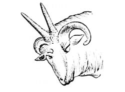 PSM V05 D601 Head of four horned sheep.jpg