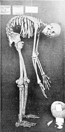 PSM V50 D507 Ossified skeleton of an aged elder from robles rancheria.jpg