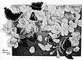 Paa eplegrenen - on apple branch.jpg
