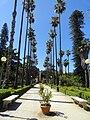 Palm street, Palermo, Sicily, Italy (9455631297).jpg