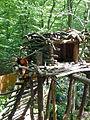 Parc animalier de Sainte-Croix-Panda roux (1).jpg