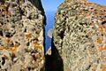 Parc national des îles de Zembra et Zembretta 97.JPG