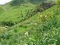Parcours botanique Le Gua, Alpe d'Huez abc5.jpg