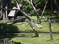 Parque del Este 2012 085.JPG