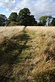 Path across field at Little Saxham - geograph.org.uk - 1533292.jpg