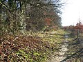Path along what used to be the edge of the Beechwoods - geograph.org.uk - 1410547.jpg