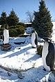 Penguin! (2269376707).jpg