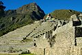Peru - Machu Picchu 013 - looking back up at the terraces (7181870875).jpg