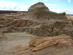 Petrified-wood-6.jpg