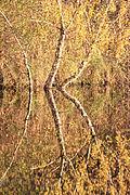 Pfrunger-Burgweiler Ried Oktober 2013 08.jpg