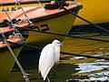 PikiWiki Israel 33728 Seagull in Jaffa port.jpg
