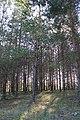 Pinède - panoramio.jpg