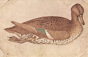 Pisanello - Duck in watercolor