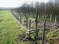 Plantation on Stower Hill - geograph.org.uk - 672363.jpg