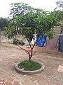 Plante arbre.jpg