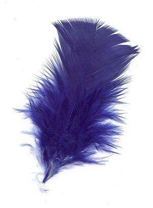 Pluma-azul.jpg