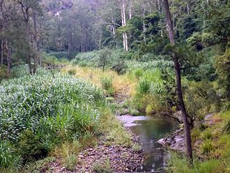 Gold Coast hinterland - Nerang River in Numinbah Valley, 2016