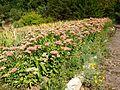 Poltava Botanical garden (34).jpg