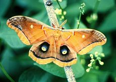 how to tell the difference between moths and butterflies