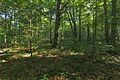 Prírodná rezervácia Borsukov vrch, Národný park Poloniny (03).jpg