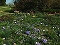 Praha, Troja, Botanická zahrada, různé květiny II.JPG