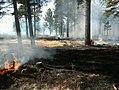 Prescribed burns - Lakeside Ranger District - Dec 2017 03.jpg