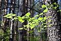 Prigorodnyy r-n, Sverdlovskaya oblast', Russia - panoramio (33).jpg