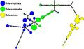 Principal tree for Iris data set.png