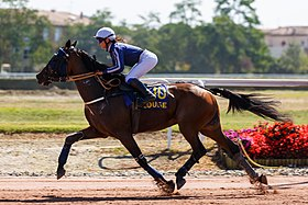 photo cheval trot