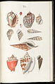 Prodromus in systema historicum testaceorum Tafel 06.jpg