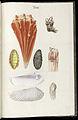 Prodromus in systema historicum testaceorum Tafel 13.jpg