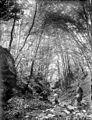 Promenade en famille dans les bois, Allemagne (6978801037).jpg