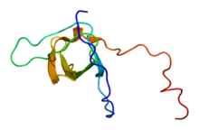Protein STAM2 PDB 1x2q.png
