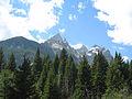 Pseudotsuga menziesii subsp glauca forest Grand Teton NP.jpg