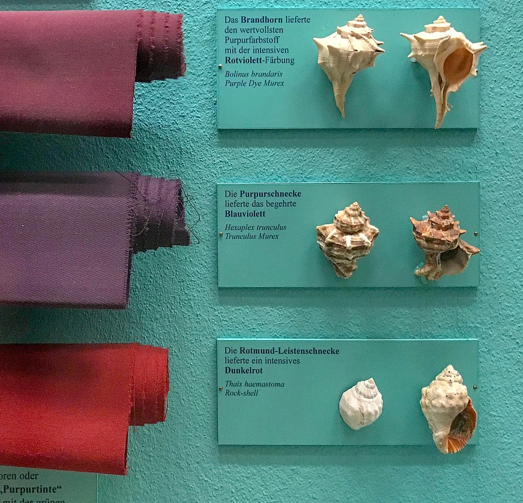 A display showing various snail shells mounted on the right, and rolls of dyed cloth on the left. The top shells produce a burgundy colour; the middle shells produce a plummy purple (Tyrian purple), and the bottom shells produce a vivid red.