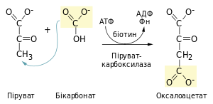 Pyruvate carboxylation.svg