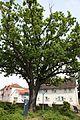 RÜ 4, Bismarck-Eiche, Rüsselsheim am Main, Hesse, Germany; northeast.jpg