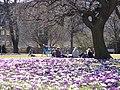 Rådhusparken (forår) 01.jpg