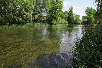 Río Arlanzón 1.jpg