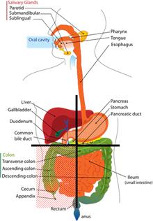 stomach cramps using prilosec