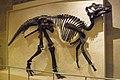 ROM 25 - Hadrosaurus (14173090987).jpg