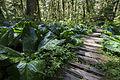 Rain Forest Trail (14492998429).jpg